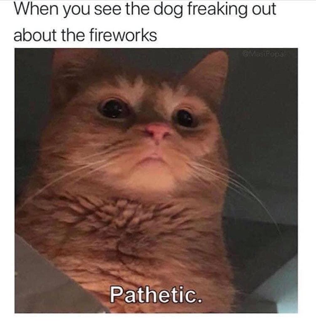 cat meme, cat memes, funny cat memes, funny cat meme, funniest cat memes, funniest cat meme, best cat meme, best cat memes, funny cat pics, funny cat photos, funny cat pictures, cat pictures for memes, funny cat pictures for memes, cat pics for memes, funny cat pics for memes, cat photos for memes, funny cat photos for memes, funniest cat pics, funniest cat pictures, funnies cat photos, funniest cat pics for memes, funniest cat photos for memes