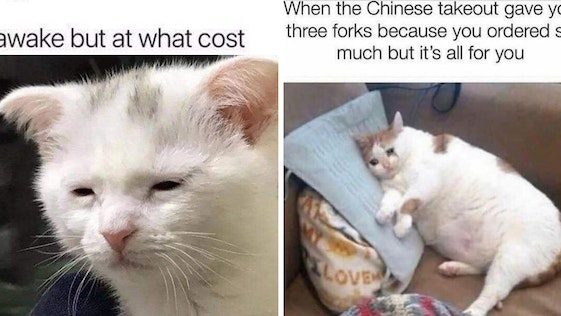 cat meme, cat memes, funny cat memes, funny cat meme, funniest cat memes, funniest cat meme, best cat meme, best cat memes, funny cat pics, funny cat photos, funny cat pictures, cat pictures for memes, funny cat pictures for memes, cat pics for memes, funny cat pics for memes, cat photos for memes, funny cat photos for memes, funniest cat pics, funniest cat pictures, funnies cat photos, funniest cat pics for memes, funniest cat photos for memes